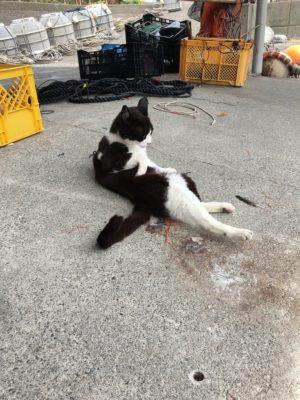 志和漁港に住み着くネコ 探してみてネ!