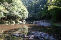 久木の森山風景林3