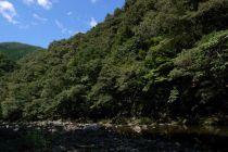 久木の森山風景林2